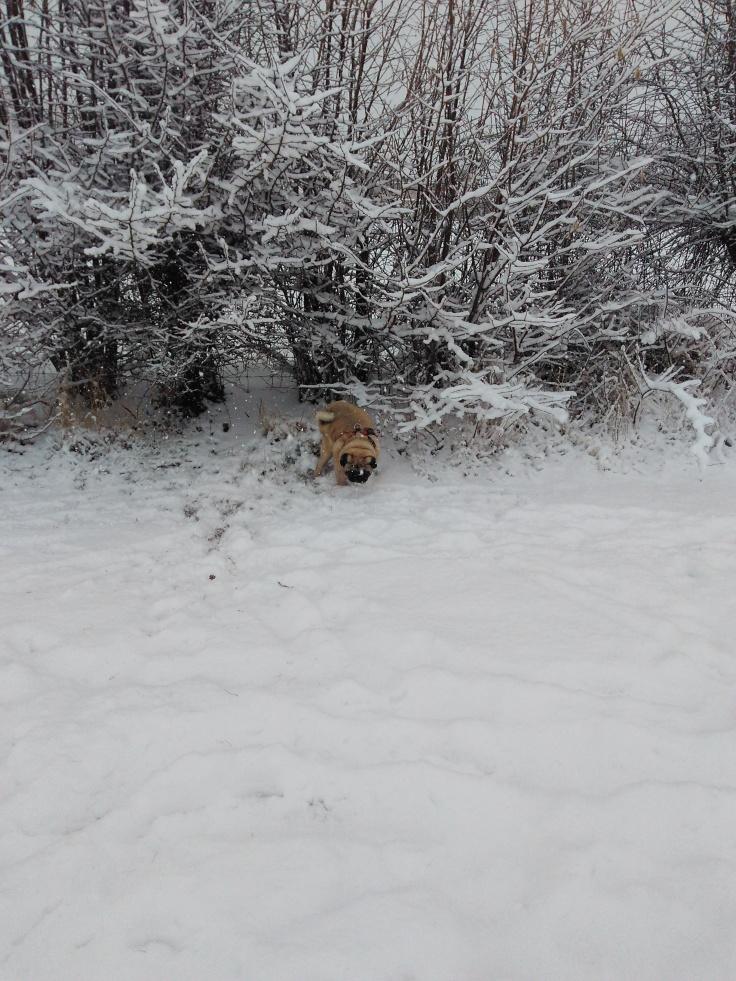6.02.1028 - Snow